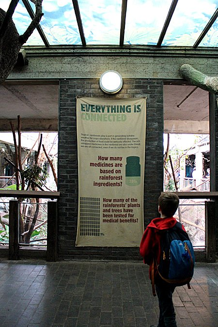 Reading up About the Rainforest at London Zoo, Image: Sophie Brown