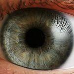Consejos para disminuir la fatiga ocular cuando estamos frente a una pantalla por mucho tiempo
