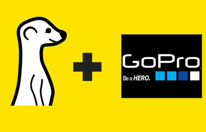 meerkat-gopro