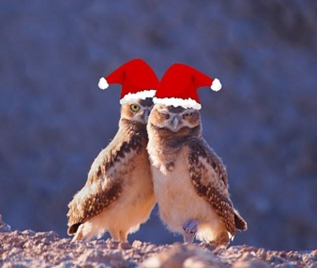 Xmas Owls Download Free Wallpaper