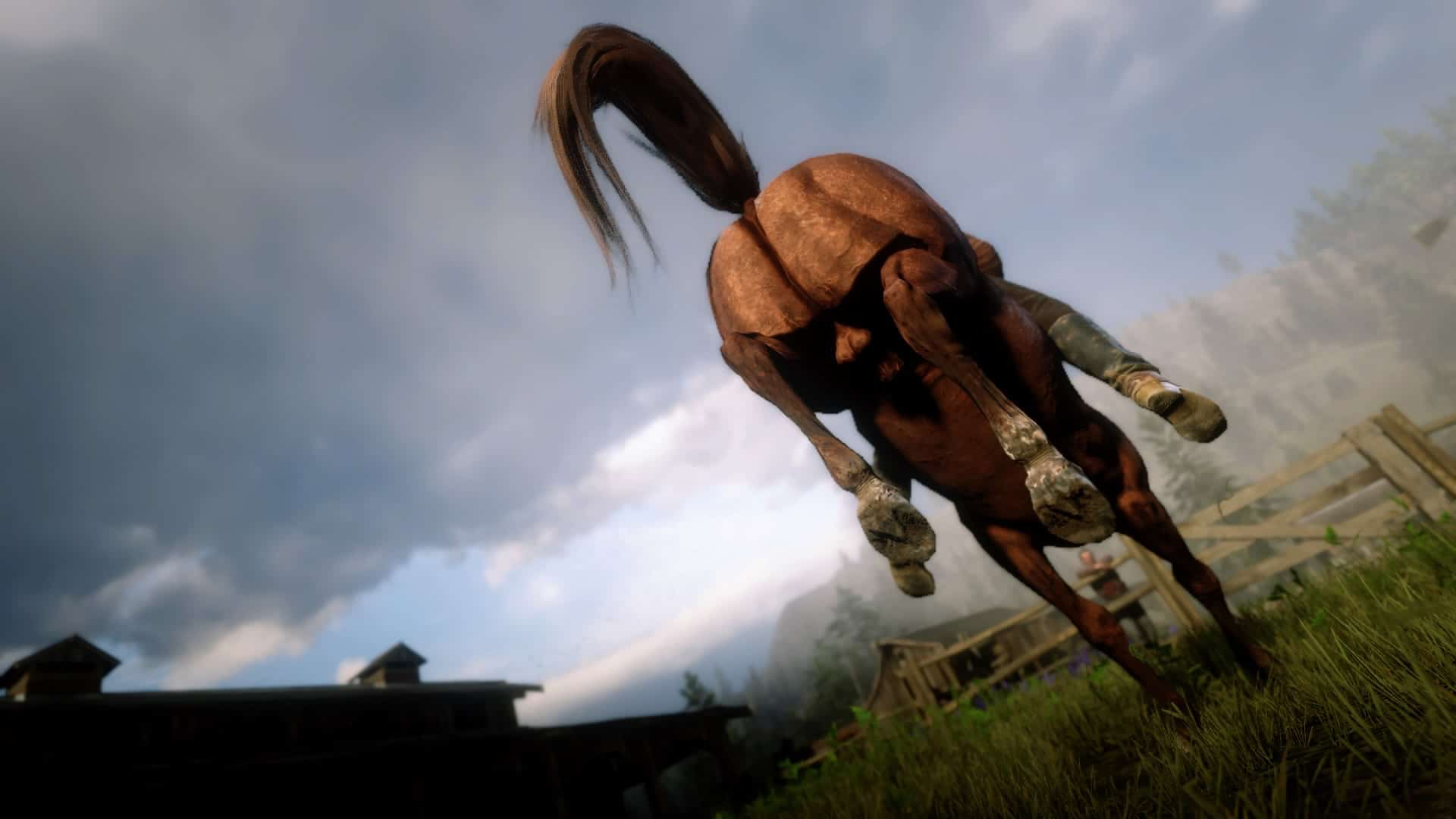 red dead redemption 2 horse testicles