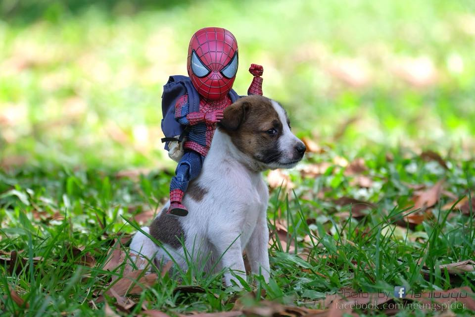 Spider Man With A Puppy Photoshoot