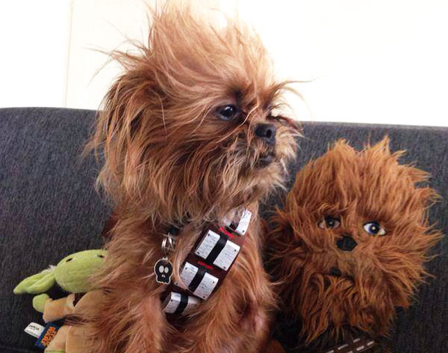 chewbacca wookiee dog