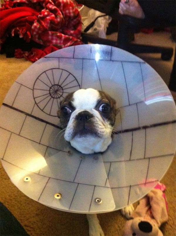 Death Star Dog Cone of Shame