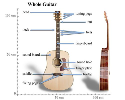 Best Guitars for Beginners in India - Reviews & Guide 7
