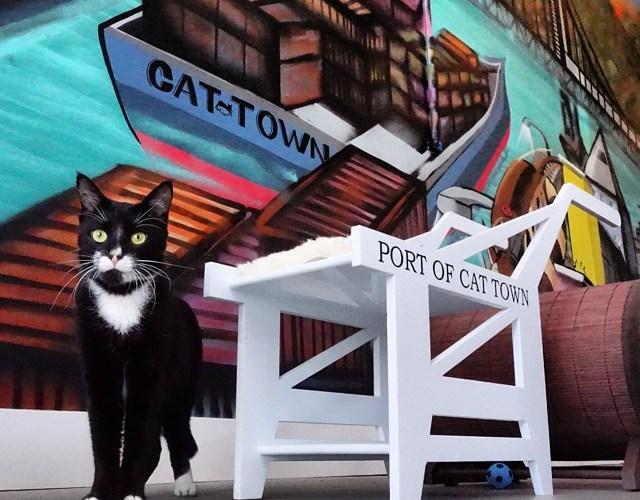 10 Cat Cafés You Can Visit in North America