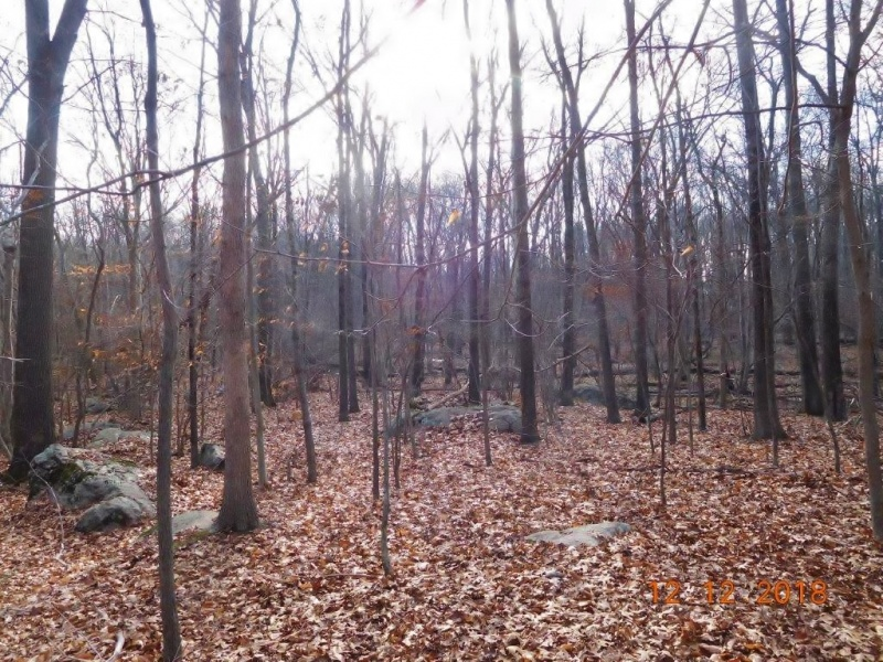 winter woods for sale