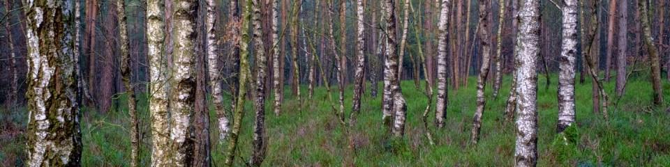 bos, hooge vuursche, loo, wandeling