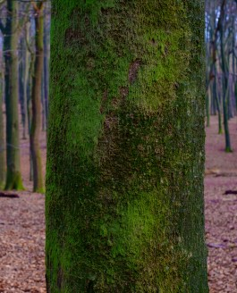 De Bomen en het Bos