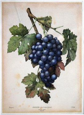 9-paul-masson-grapes-5854