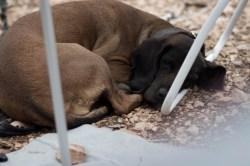 lazy dog²