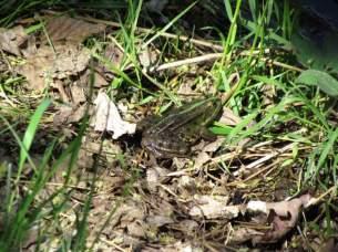Frosch am Kanal