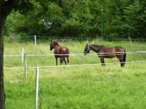 Pferde an der Schlossallee