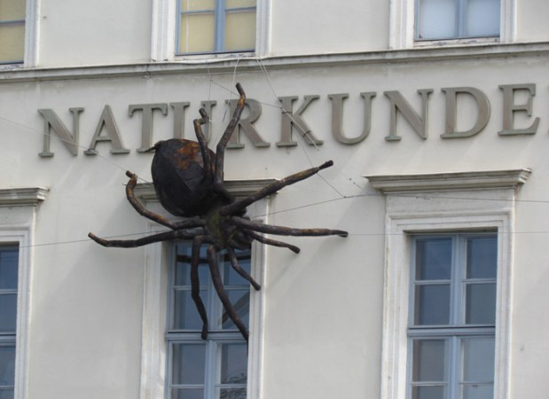 Spinne am Naturkundemuseum