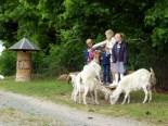 Kinder und Ziegen in Aktion