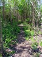 Wilder Weg im wilden Wald
