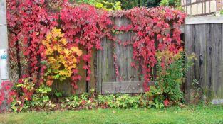 Herbst in Abtnaundorf