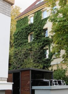 Grüne Wand in Gohlis