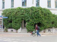 Grüne Wand an der Ecke von Könneritz- und Rochlitzstraße