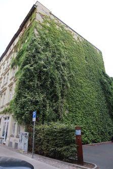 Grüne Wand in der Südvorstadt, Foto: Wieland