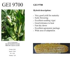 GEI 9700 Hybrid Corn Seed