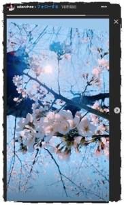 足立梨花の現在の顔が変わった!原因はツイッター炎上?桜のストーリーは捏造か!
