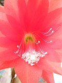 Happy cactus flower