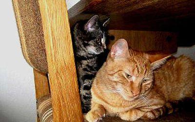 Hunde og katte – et stridsmål i boligafdelinger