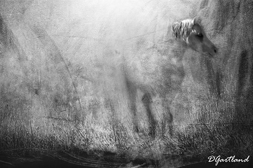 Mystic Horse - A4 Illustrative composite photography by Deb Gartland