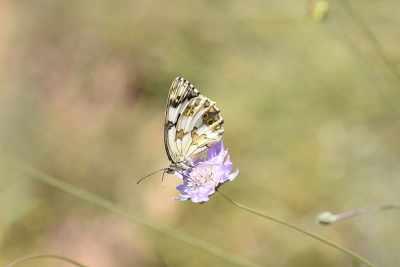 Les papallones de la Vall de Corb