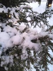 Crappy macro of a snowy tree #pro
