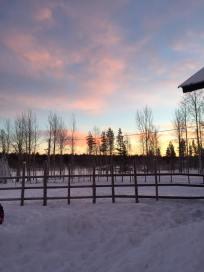Birch Trees & Candyfloss skies