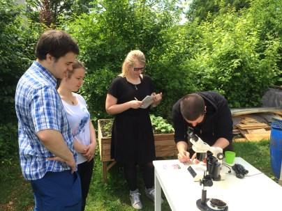 Bodenlebewesen mikroskopieren