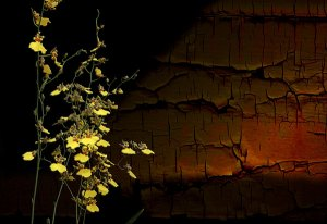 Image of Light Painting Flowers Duet