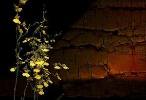 Image of Light Painting Flowers Duet