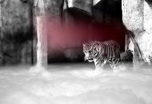 Image of Light Painting Lair of the Peppermint Tiger