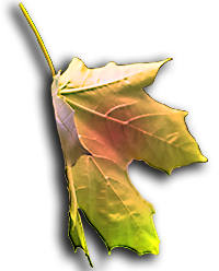 Image of MultiColor Falling Leaf is on the Homepage.