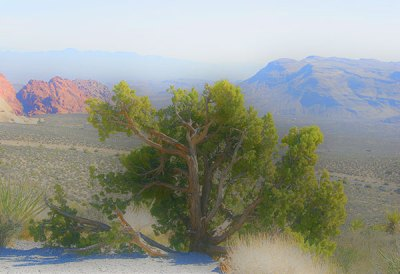 Red Rock Canyon Tree