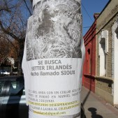 LOST IRISH SETTER NAMED SIOUX, SANTIAGO, CHILE