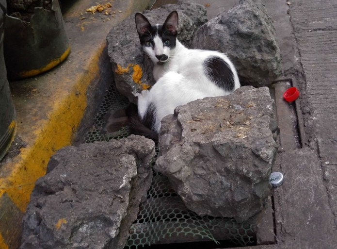 cat Philippines