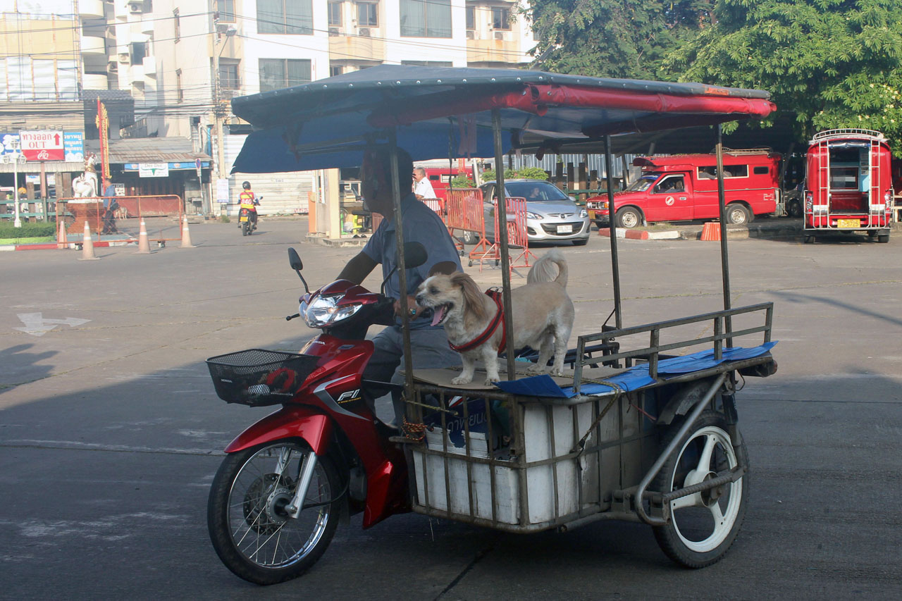 dog on tricycle- Chiang Mai Railway Station