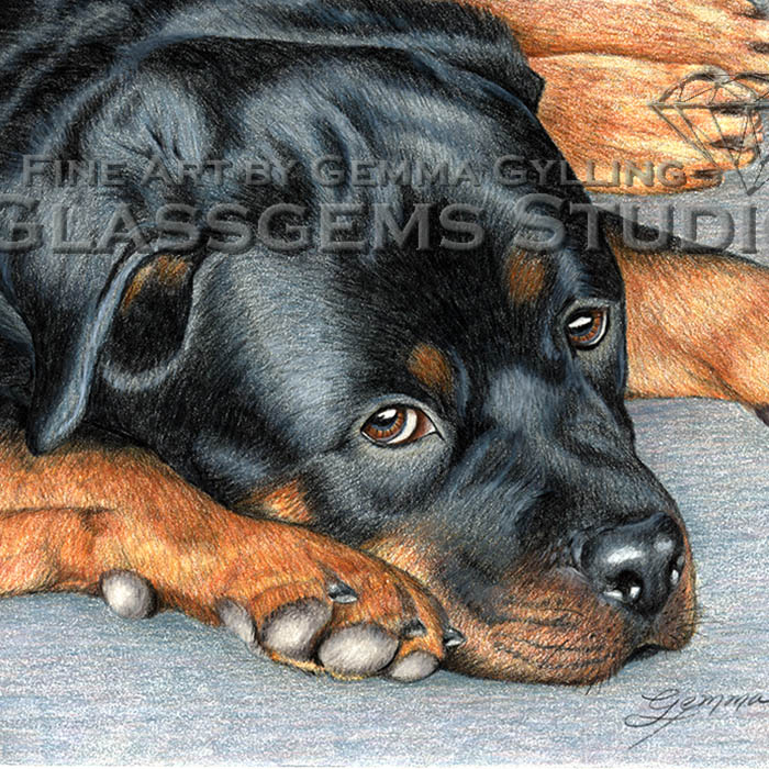 Brand-O, Rottweiler, colored pencil on smooth paper