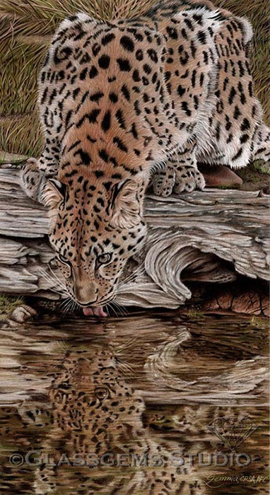 """Endangered Reflections"", Amur Leopard, colored pencil on suede mat board, 22"" x 12"""