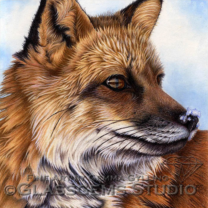"""""""Waiting for the Spring Snow Melt"""", Red Fox, colored pencil on pastelmat, 8"""" x 8"""""""