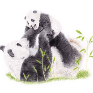 Panda Bear Fine Art Print