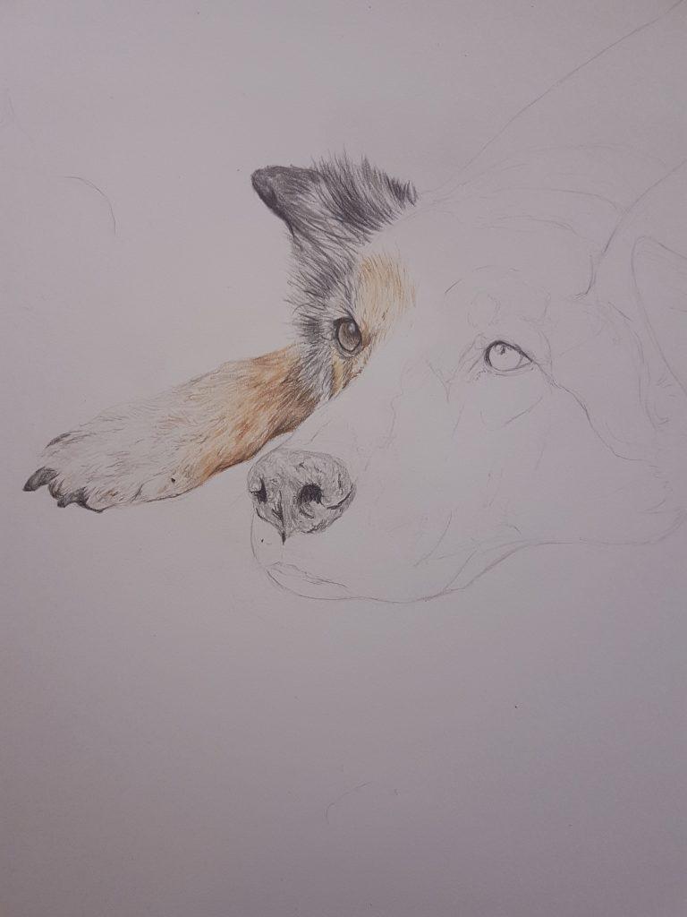 Pet portrait of a geman shepherd