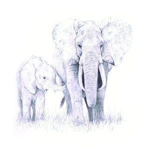 Elephant mum and calf print