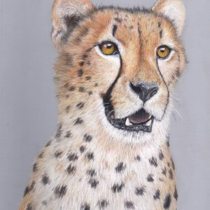 Cheetah fine art print