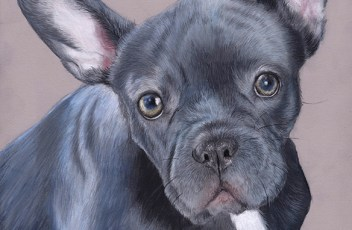 french bulldog6