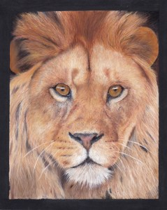 big cat drawing - lion